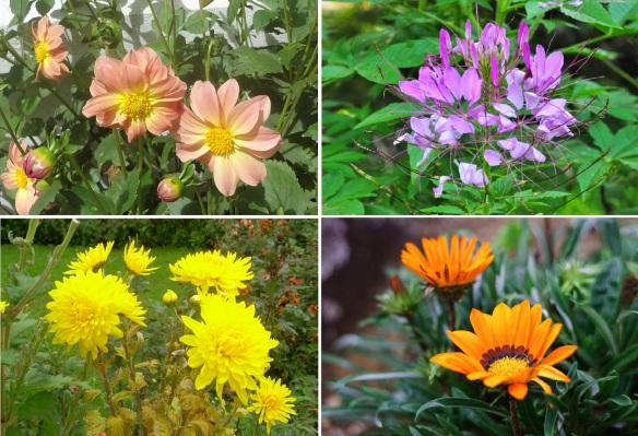Flowers of Nuwara Eliya