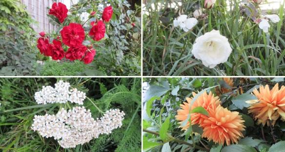 Flowers, found in Sellens village