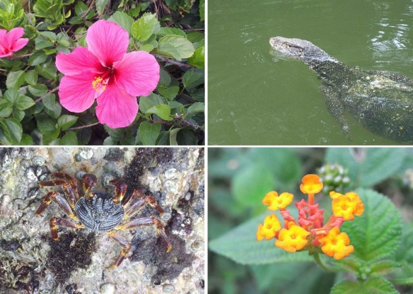 Flora and fauna of the Galle city.