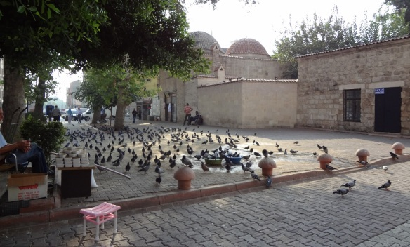 Arrived at the mosque, Ulu Cami Adana. There is a vendor who sells bait of pigeon. It's not clean.