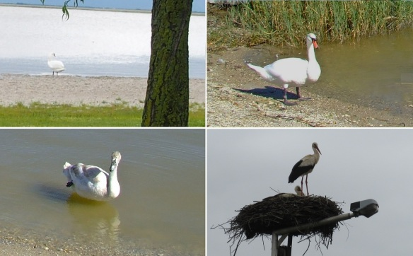 The lake is an important resting place for migratory birds.