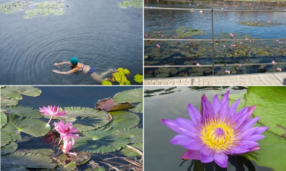 These lotuses bloom all the year round.