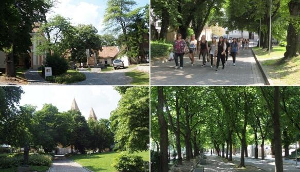 Walking throuogh the Janus Pannonius street.