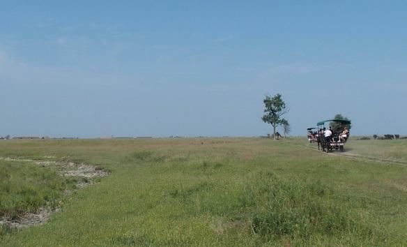 Great Hungarian Plain, Pusta
