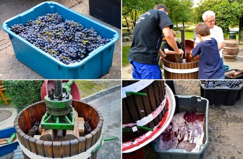 In front of a winery, they are squeezing the grapes and making wine.